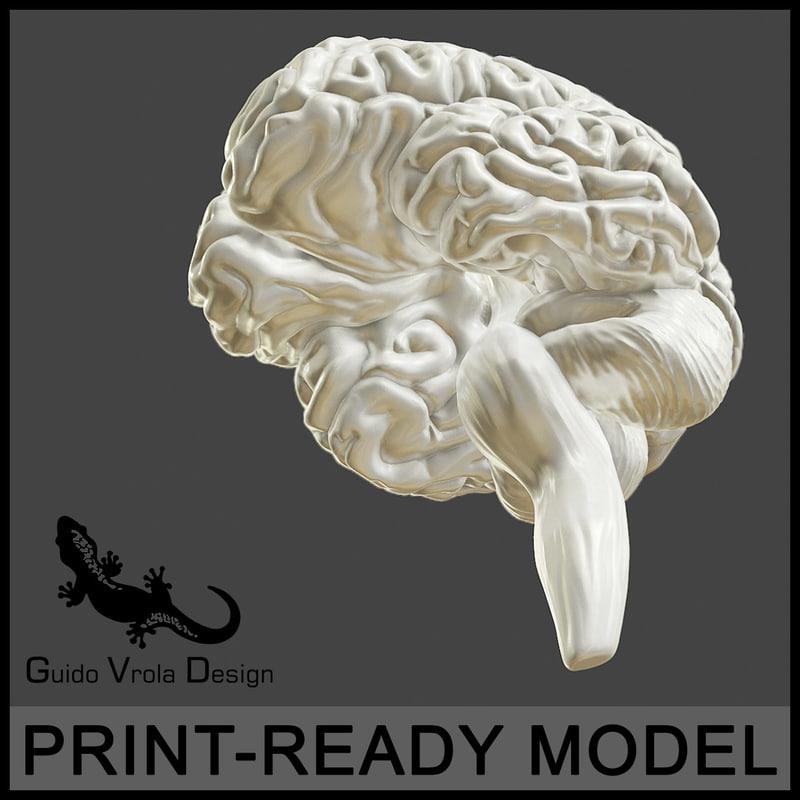 accurate human brain obj