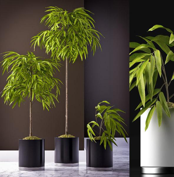 3d ficus alii plants model