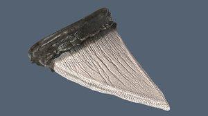 3d model shark tooth
