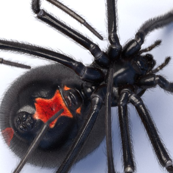 c4d black widow spider
