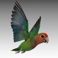lovebird animations max