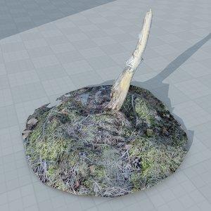 3d scan tree stump