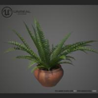 home plant fern 3d model