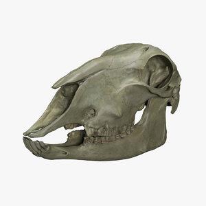 doe skull 3d max