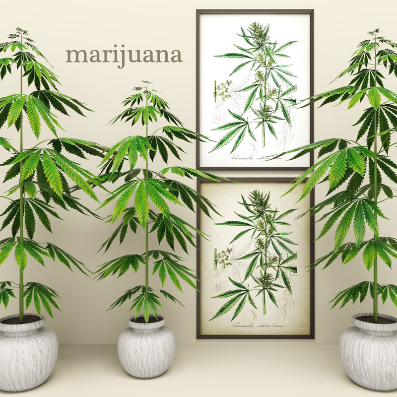 3d model of cannabis