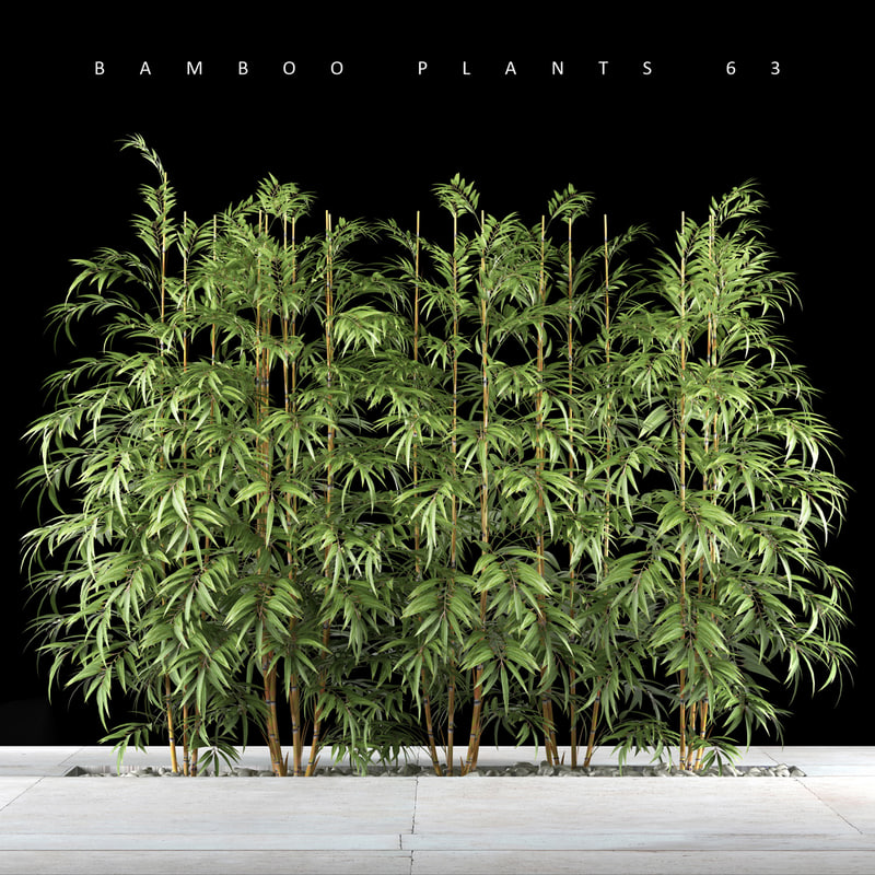 bamboo plant max