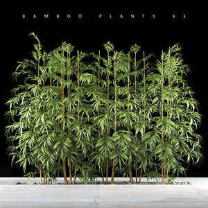 bamboo plant max