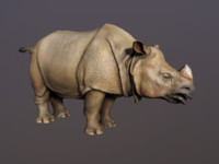 indian rhinoceros obj