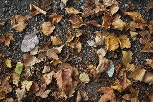 Leaf_Texture_0002