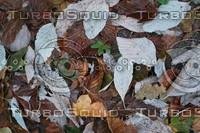 Leaf_Texture_0003