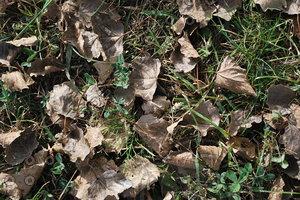 Leaf_Texture_0004