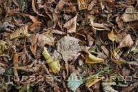 Leaf_Texture_0006