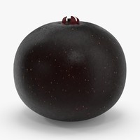 elderberry elder 3d model