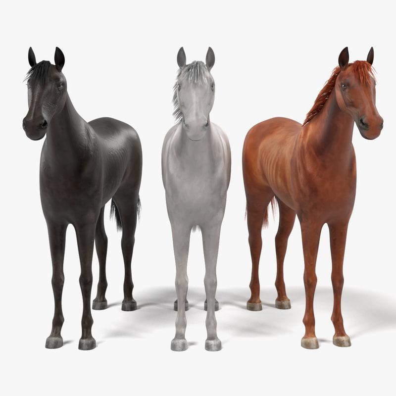 horses white 3d 3ds