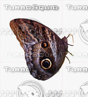 butterfly 2d