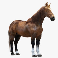 3d model horse realistic modeled