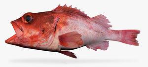 3d blackgill rockfish