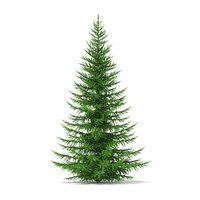 3d model norway spruce picea abies