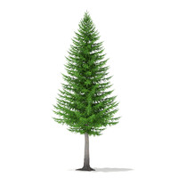 norway spruce picea abies 3d c4d