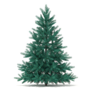 spruce picea pungens 1 max