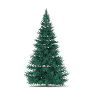 3d spruce picea pungens 3 model
