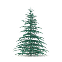 3d blue spruce picea model