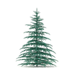3d blue spruce picea model