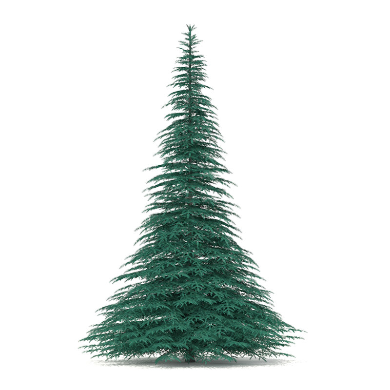 3d spruce picea pungens 7 model