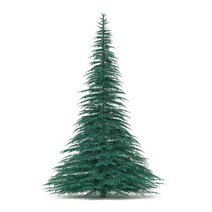 spruce picea pungens 7 max