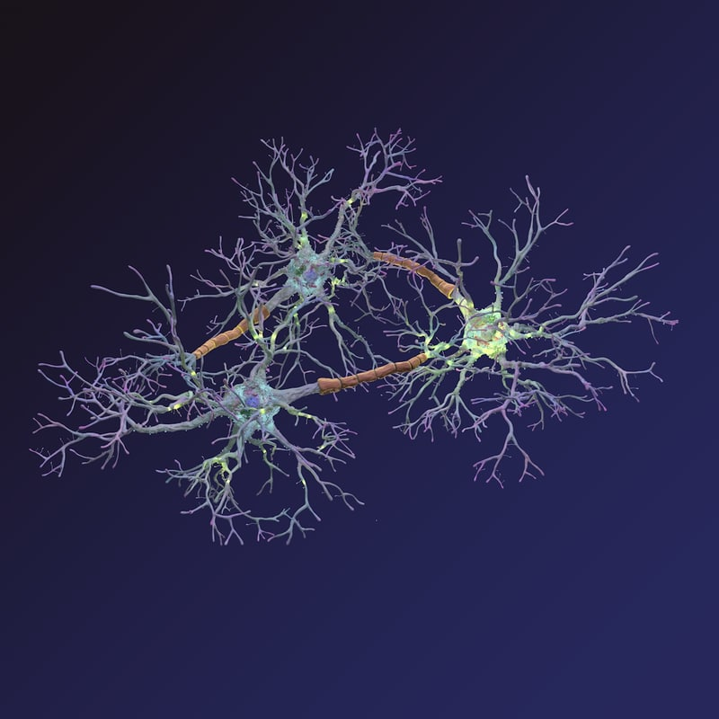 neurons synapses myelin c4d
