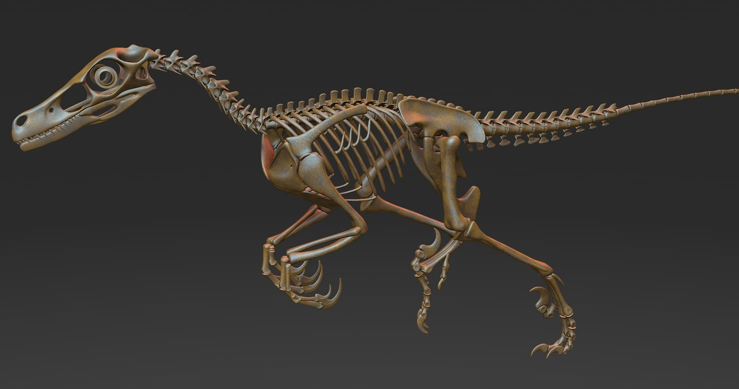3d model velociraptor skeleton
