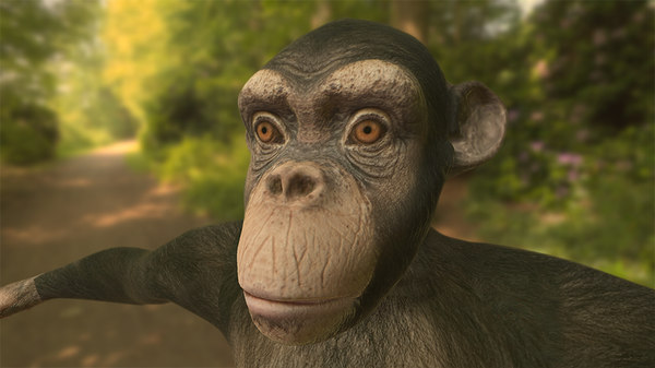 3d chimpanzee chimp model