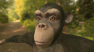 3d chimpanzee chimp model