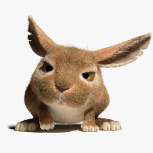3d model of rabbit character rig