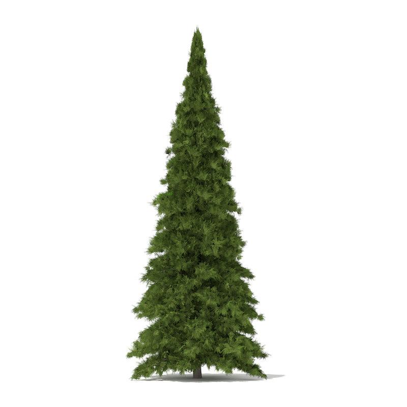 white cedar thuja occidentalis 3d max