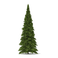 white cedar thuja occidentalis 3d max