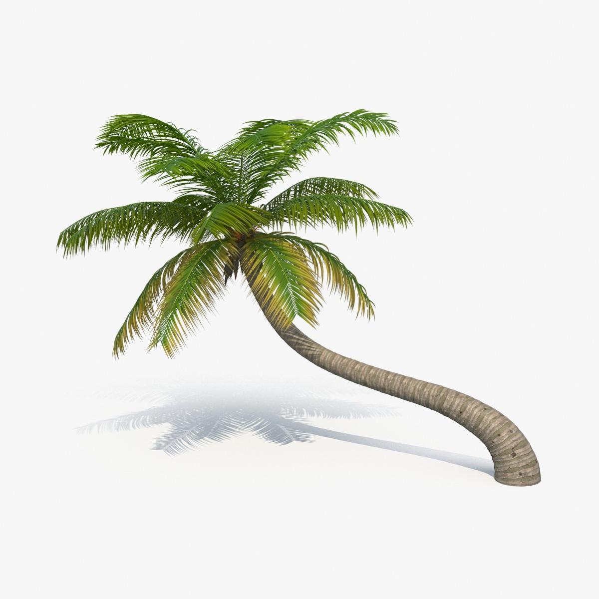 3d palm-tree---tree-03