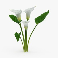 3d calla-lily---3-lilies-natural-group