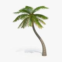 max palm-tree---tree-05