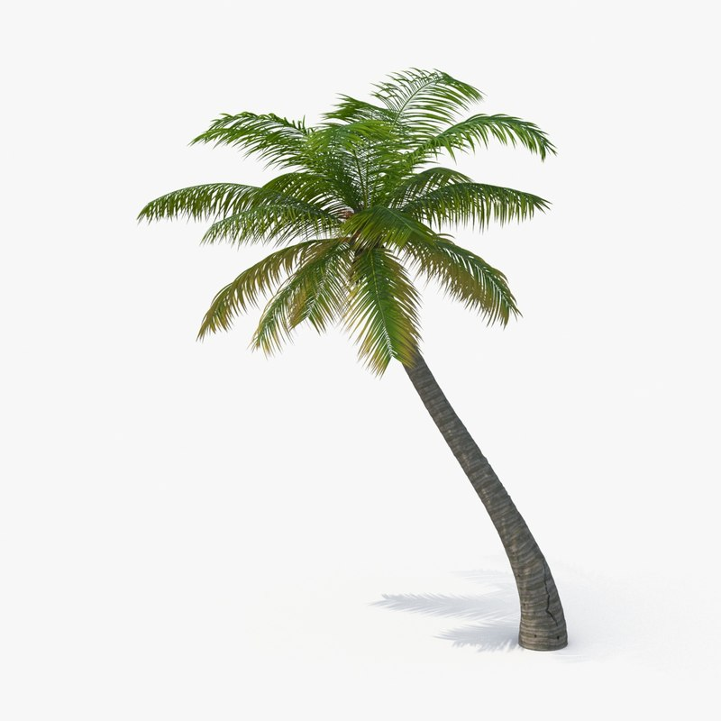 3d model of palm-tree---tree-04