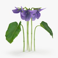 3d violet----small-natural-group model