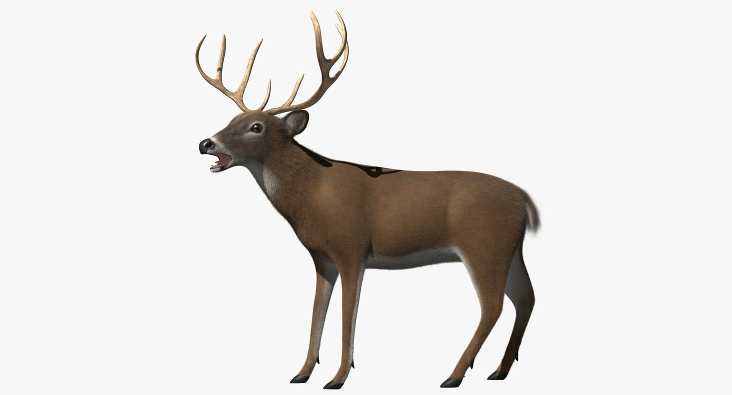 3d white-tailed deer tail