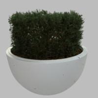 planter plant 3d obj