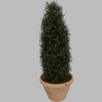 3d pot taper plant model