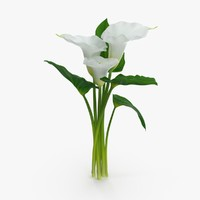 3d calla-lily---3-lilies-close-group