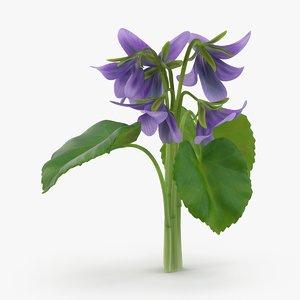 violet----close-group 3d model