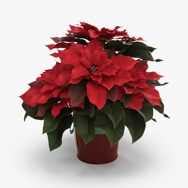 3d potted poinsettia model