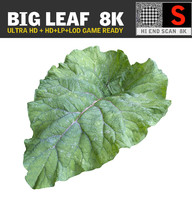 BIG LEAF 8K Ultra HD