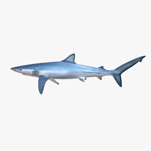 blue shark 3d obj