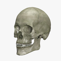Human Skull with interior
